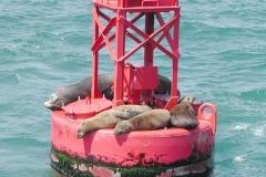 seal-bouy-2